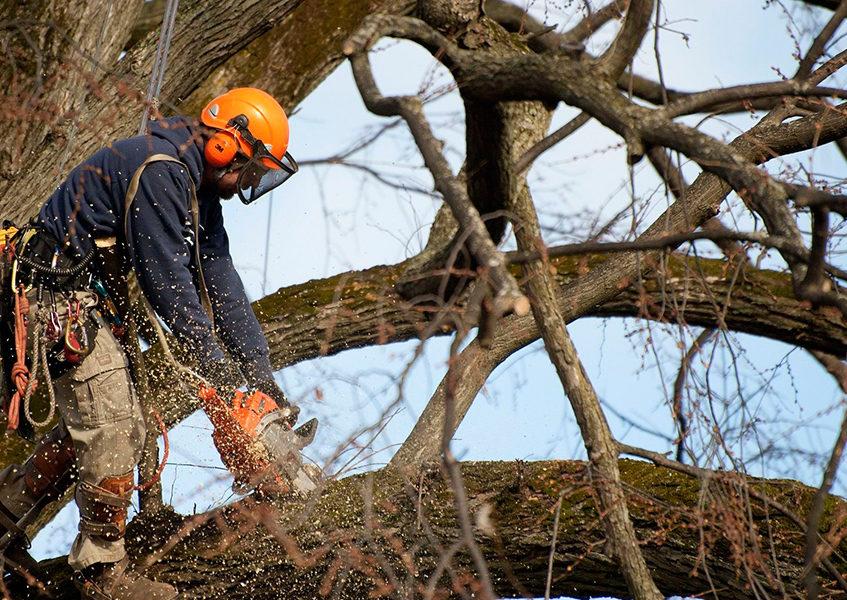 Спил деревьев в Перми