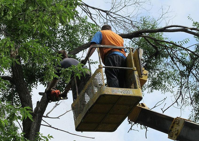 Кронирование деревьев в Перми